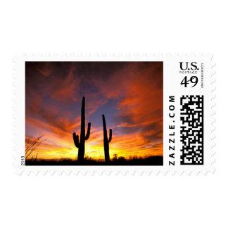 North America, USA, Arizona, Sonoran Desert. Stamp