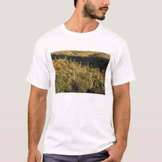North America, USA, Arizona, Sonoran Desert T-Shirt