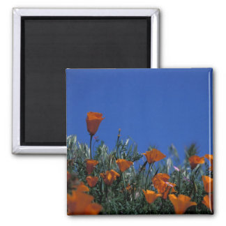 North America, USA, California, Antelope Valley, 3 2 Inch Square Magnet