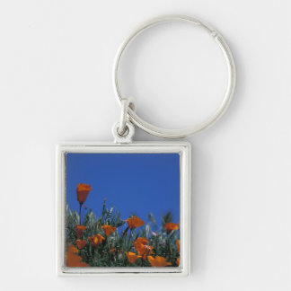 North America USA California Antelope Valley 3 Key Chain