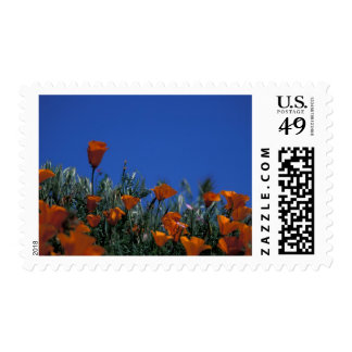 North America, USA, California, Antelope Valley, 3 Postage Stamp