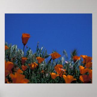 North America, USA, California, Antelope Valley, 3 Poster