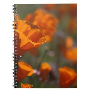 North America, USA, California, Antelope Valley, Notebook