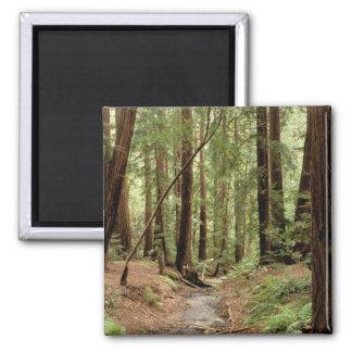 North America, USA, California, Big Sur, 3 2 Inch Square Magnet