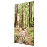 North America, USA, California, Big Sur, 3 Canvas Print