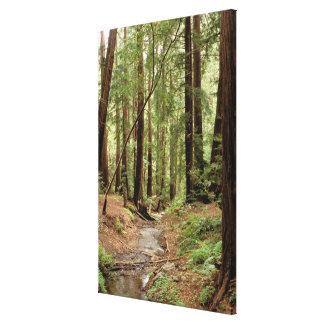 North America, USA, California, Big Sur, Canvas Print