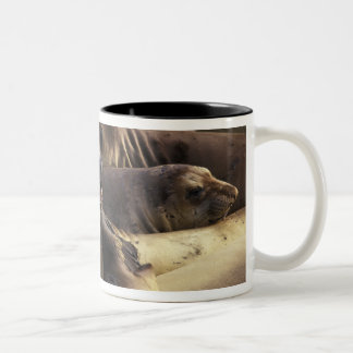 North America, USA, California, Big Sur Coast. Two-Tone Coffee Mug