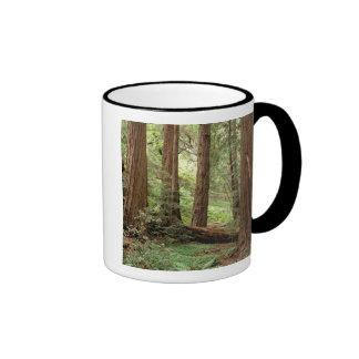North America USA California Big Sur Coffee Mugs
