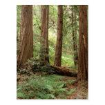 North America, USA, California, Big Sur, Post Cards