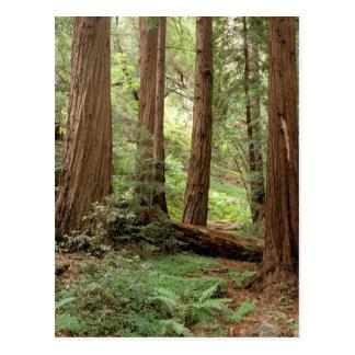 North America USA California Big Sur Post Cards