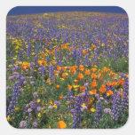 North America, USA, California, Los Angeles 2 Square Sticker