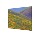 North America, USA, California, Los Angeles Stretched Canvas Print