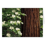North America, USA, California, Yosemite 3 Card