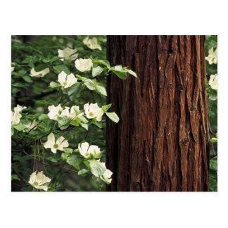 North America, USA, California, Yosemite 3 Postcard