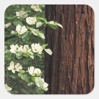 North America, USA, California, Yosemite 3 Square Sticker
