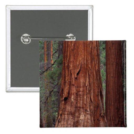 North America, USA, California, Yosemite NP, 2 2 Inch Square Button