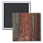 North America, USA, California, Yosemite NP, 2 2 Inch Square Magnet
