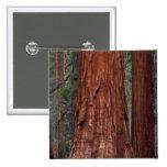 North America, USA, California, Yosemite NP, 2 Pinback Buttons