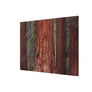 North America, USA, California, Yosemite NP, 2 Gallery Wrapped Canvas