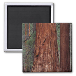 North America, USA, California, Yosemite NP, 2 Magnet