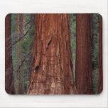 North America, USA, California, Yosemite NP, 2 Mouse Pads