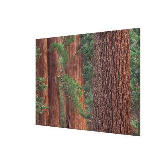 North America, USA, California, Yosemite NP, Canvas Print