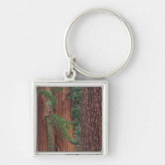 North America, USA, California, Yosemite NP, Keychain