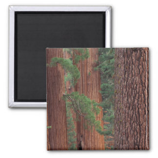 North America USA California Yosemite NP Refrigerator Magnet