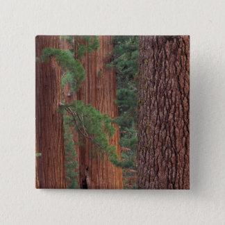 North America, USA, California, Yosemite NP, Pinback Button