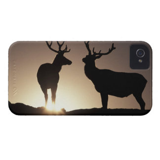 North America, USA, Colorado. Rocky Mountains iPhone 4 Case-Mate Case