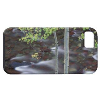 North America, USA, Colorado, San Juan iPhone 5 Cases