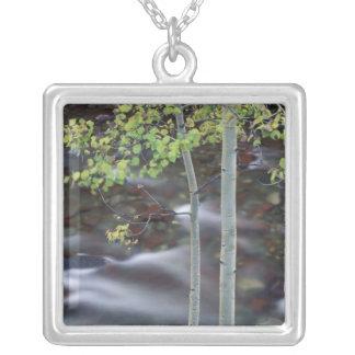 North America, USA, Colorado, San Juan Silver Plated Necklace