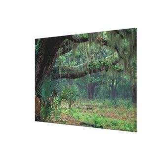 North America, USA, Georgia, Cumberland 2 Canvas Print