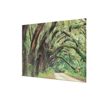North America, USA, Georgia, Cumberland Canvas Print