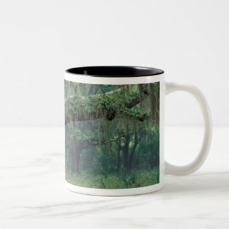 North America, USA, Georgia, Cumberland Two-Tone Coffee Mug