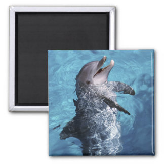 North America, USA, Hawaii. Dolphin 2 2 Inch Square Magnet