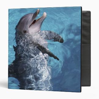 North America, USA, Hawaii. Dolphin 2 Binder