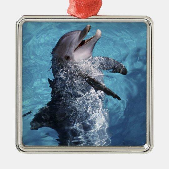 North America, USA, Hawaii. Dolphin 2 Metal Ornament