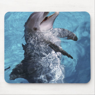 North America, USA, Hawaii. Dolphin 2 Mouse Pads