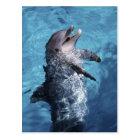 North America, USA, Hawaii. Dolphin 2 Postcard