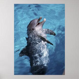 North America, USA, Hawaii. Dolphin 2 Poster