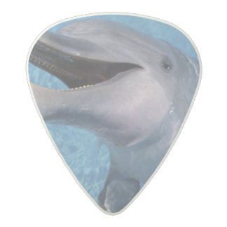 North America, USA, Hawaii. Dolphin 3 Acetal Guitar Pick