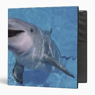 North America, USA, Hawaii. Dolphin 3 3 Ring Binder