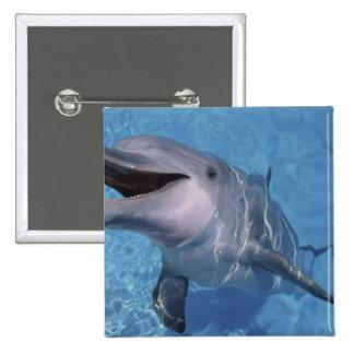 North America, USA, Hawaii. Dolphin 3 Button