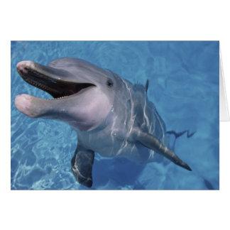 North America, USA, Hawaii. Dolphin 3 Greeting Card