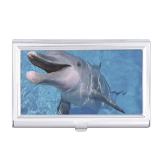 North America, USA, Hawaii. Dolphin 3 Case For Business Cards