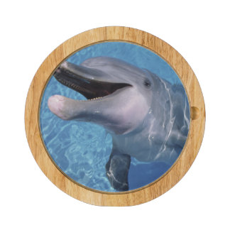 North America, USA, Hawaii. Dolphin 3 Cheese Board
