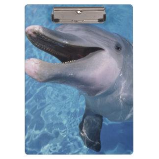North America, USA, Hawaii. Dolphin 3 Clipboard