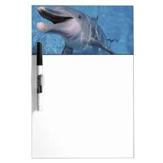 North America, USA, Hawaii. Dolphin 3 Dry-Erase Whiteboards