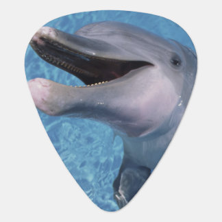 North America, USA, Hawaii. Dolphin 3 Guitar Pick